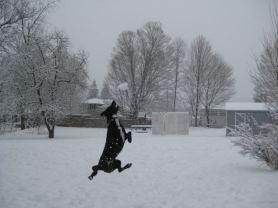 Catching a snowball